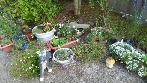 秋の寂し庭