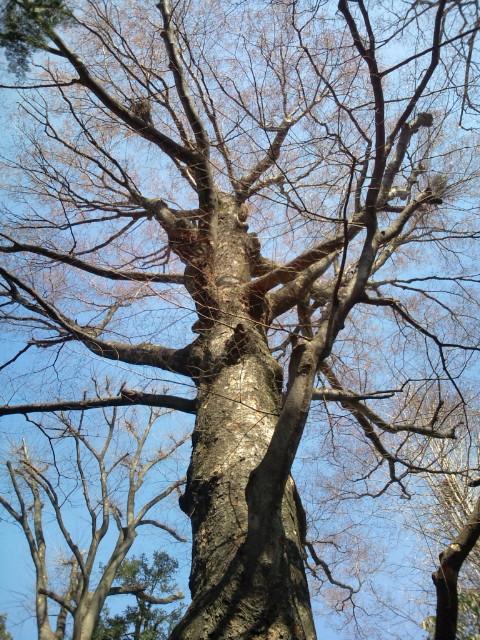 奥沢神社樹✨F1000997