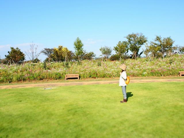 PA140005花菜ガーデン