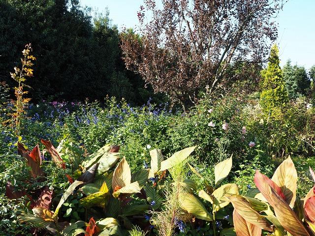 PA140014花菜ガーデン