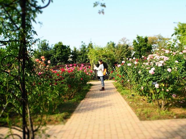 PA140026花菜ガーデン