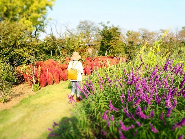 PA140031花菜ガーデン