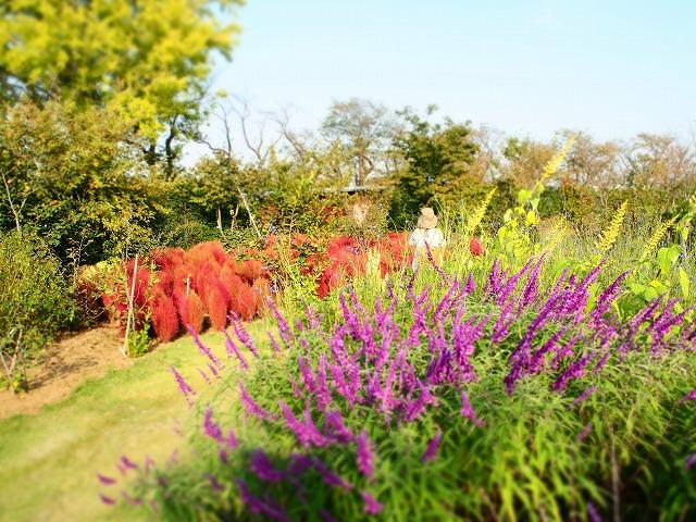 PA140032花菜ガーデン