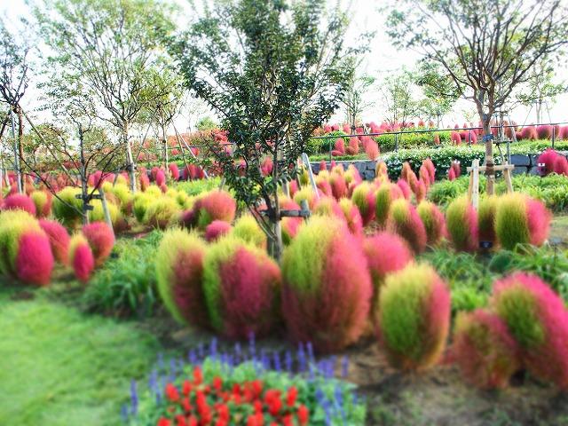 PA140034花菜ガーデン