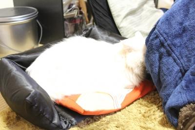 prepare kotatsu4