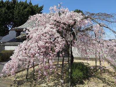 IMG_0572 広雲寺
