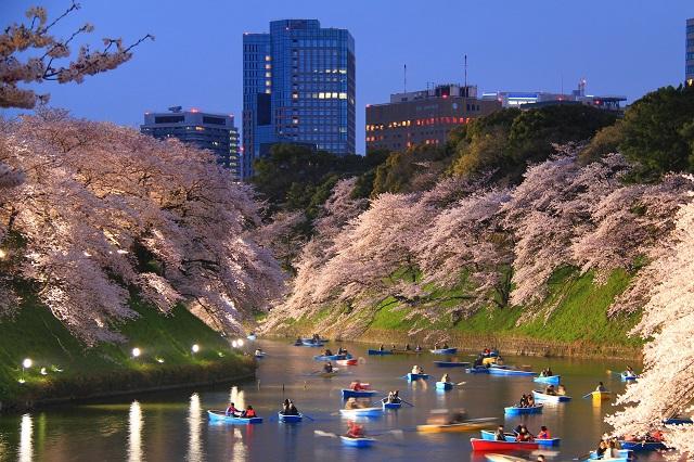 千鳥ヶ淵緑道からの夜桜