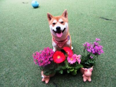 花々とハナ
