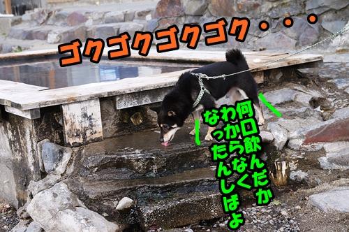 DSC05720_20151013164536edf.jpg