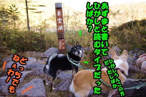 DSC06386_20151017135727dca.jpg