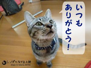 糸くん11