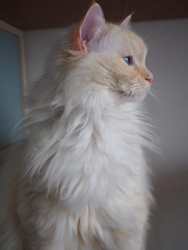 ほっそり白玉猫2