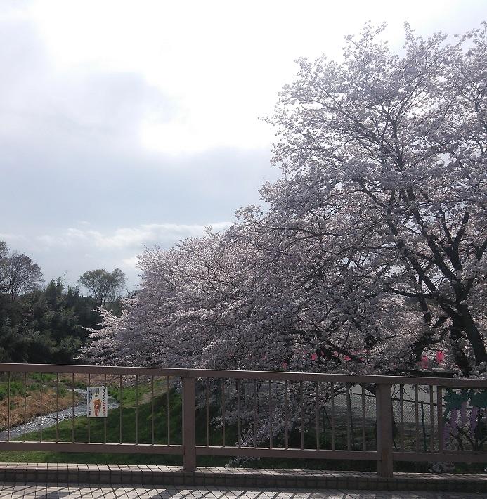 ⑪桜の名所