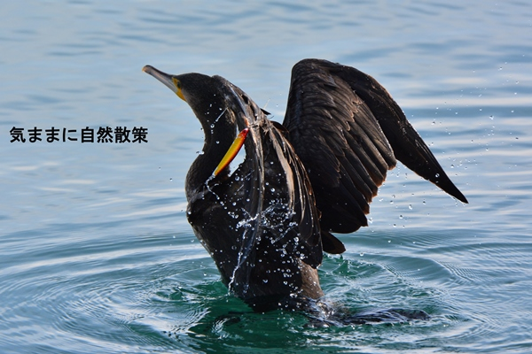 傷病鳥 (1)