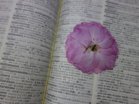 花見の後は辞書の中へ
