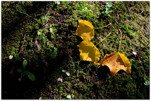 青森県 弘前市 観光 弘前公園 弘前城 弘前城植物園 秋 写真