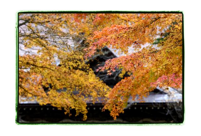 青森県 平川市 猿賀神社 猿賀公園 七五三 お宮参り お詣り 出張 写真 撮影 カメラマン フリーカメラマン 同行 ロケーション