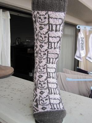 猫好好Socks-003