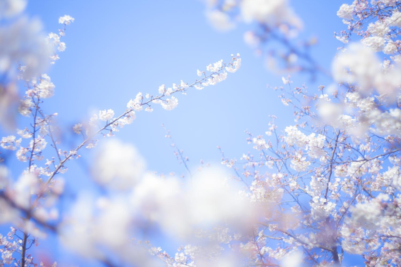 -shared-img-thumb-TSU88_tabidachi_TP_V.jpg