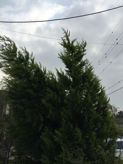 20151115001_傾いた木