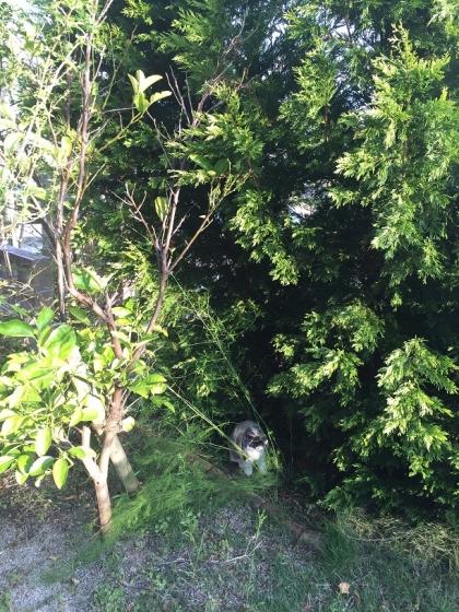 20151115002_傾いた木の下で休むそら