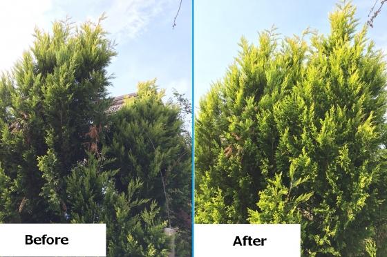 20151115006_木の修復前後