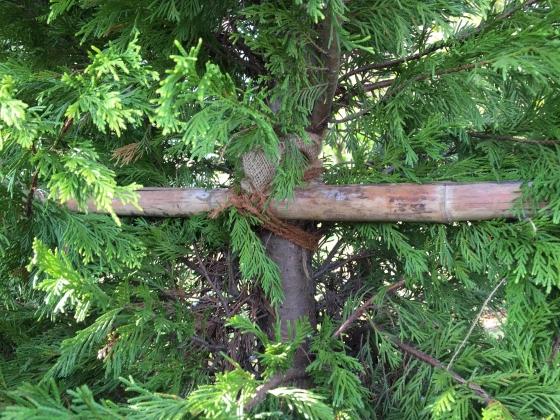 20151115007_木を固定する