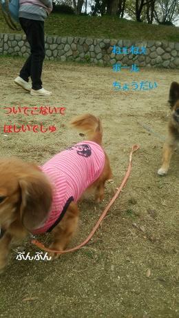 DSC_0377_2015112406473280f.jpg