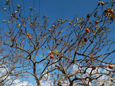 10.25秋の空と柿