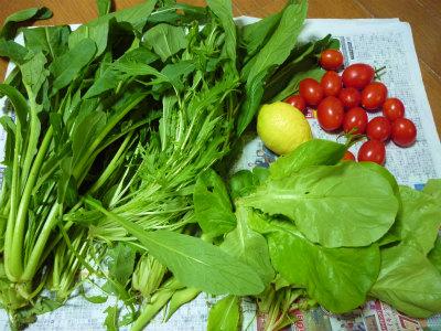 11.4採った野菜2