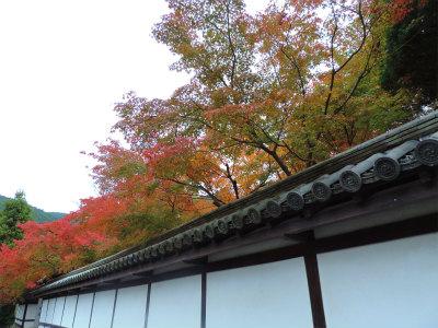 11.7南禅寺の紅葉2