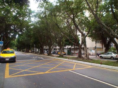 11.1街路樹