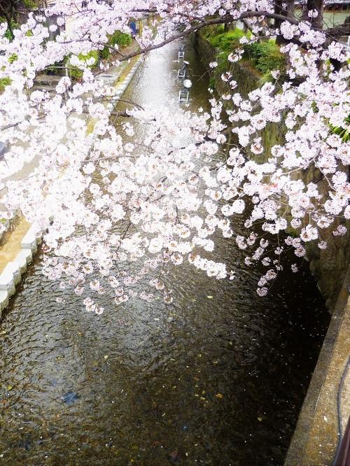 2016桜咲く-その2