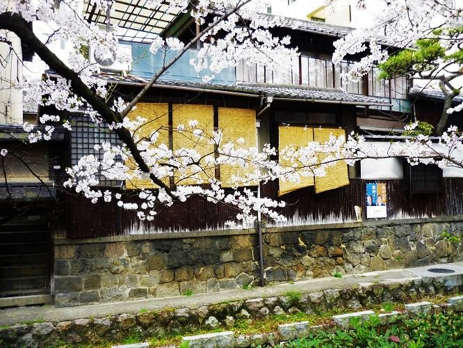 2016桜咲く-その3