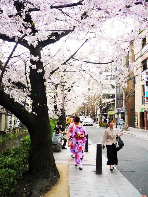 2016桜咲く-その5