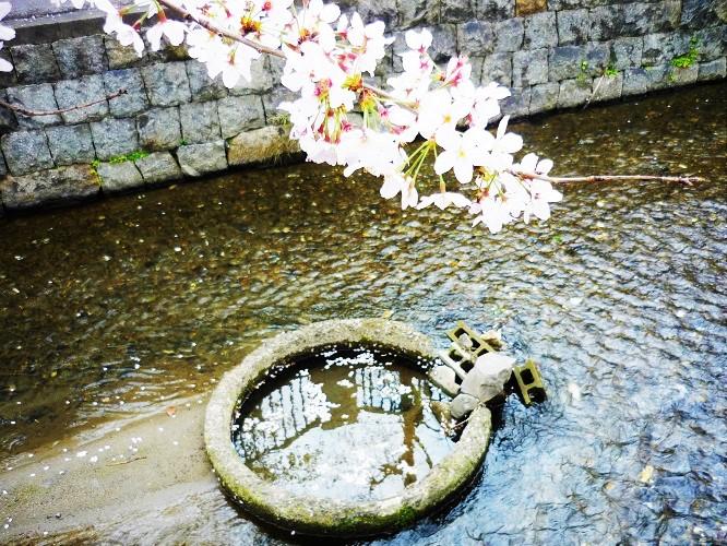 2016桜咲く-その6