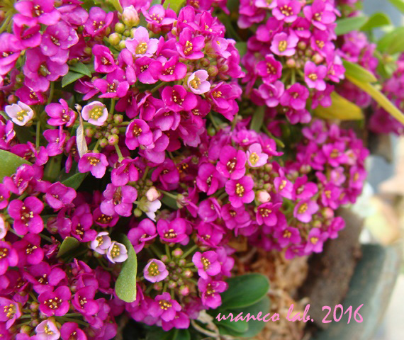 3月15日紫小花