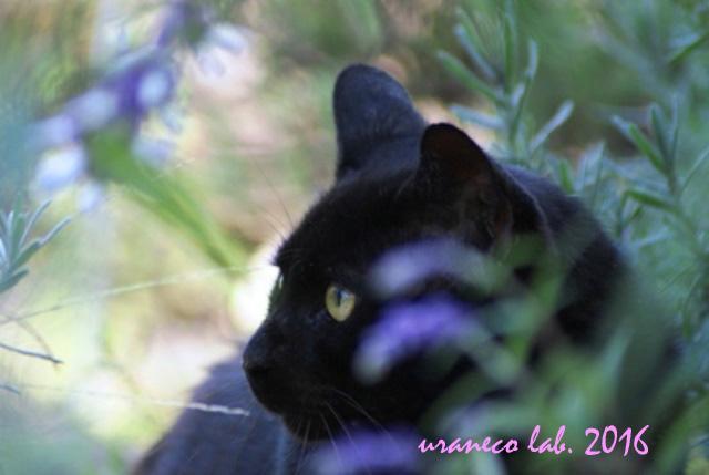 3月22日黒猫