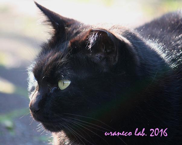 3月22日黒猫逆光
