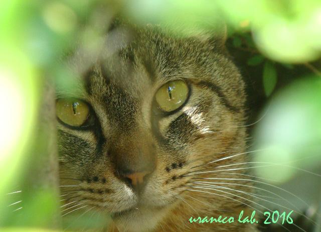 3月25日雉猫2