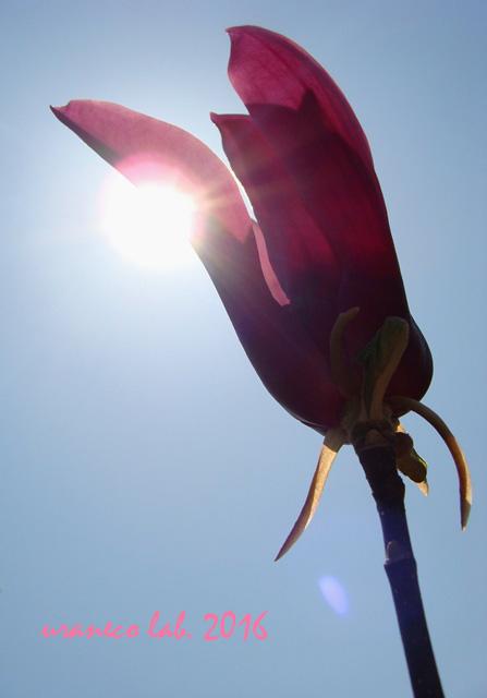 3月25日陽光