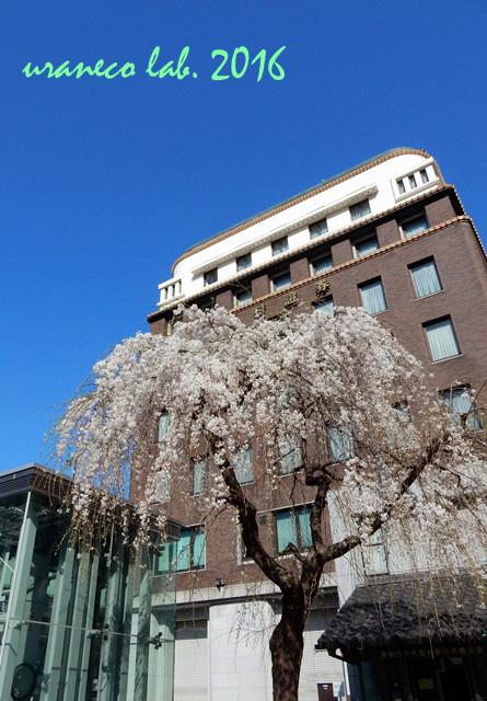3月28日しだれ桜3