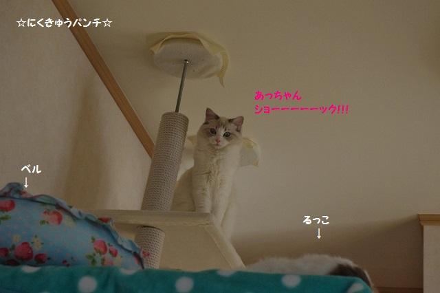 160404IMGP1189.jpg