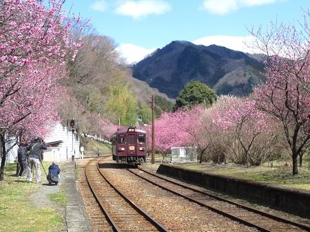 030花桃と電車