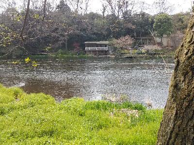 柿田川湧水地 001