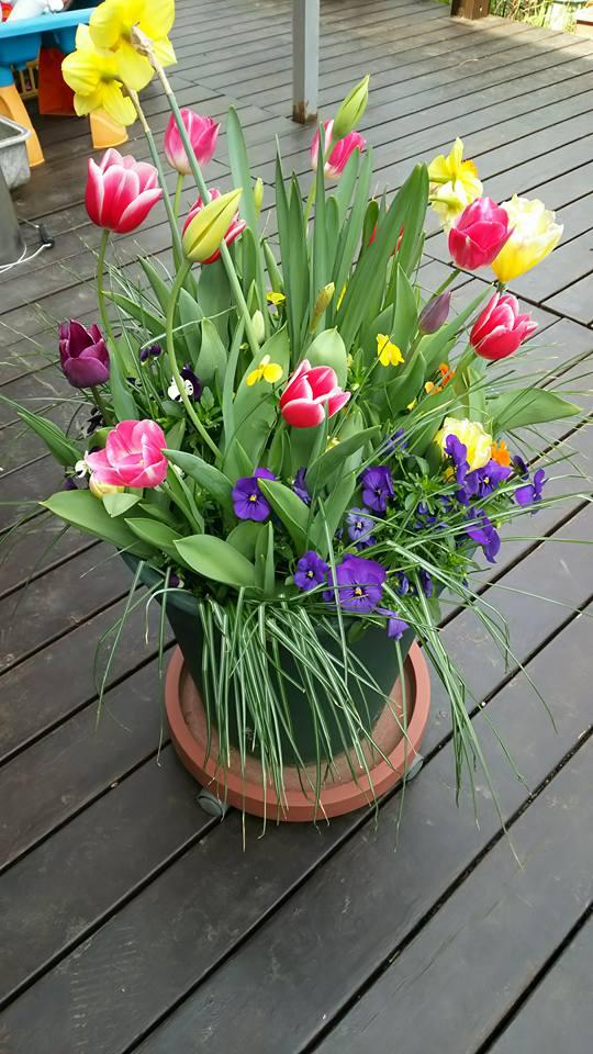 春のコンテナガーデン2
