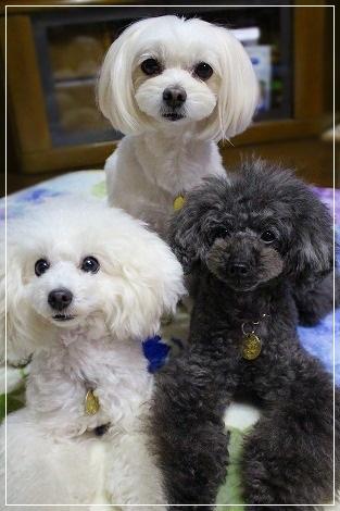 追い詰められた飼い主を見つめる3姉妹・・・
