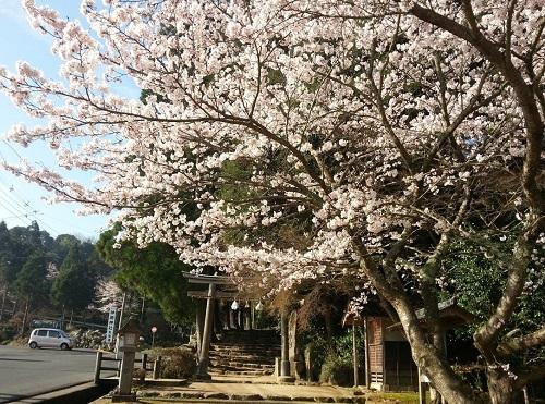 160402_桜05