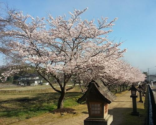 160402_桜01