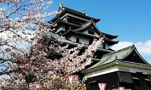 160405_桜002